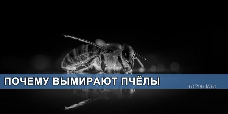 С чем связано вымирание пчёл